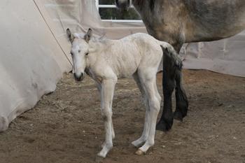 Foal-Noelle-3-3-09-3W350