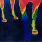 OneShodThermograph