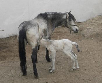 Foal-Noelle-3-3-09-5W350