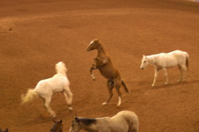 1-horse-rearing400