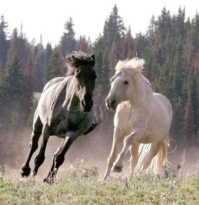How To Save America S Wild Horses The Soul Of A Horse Blog