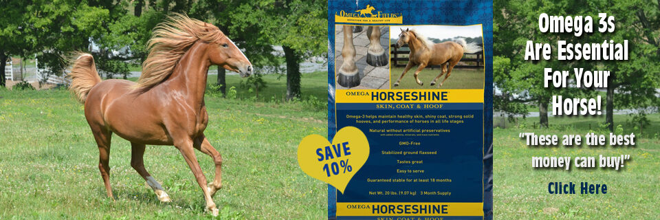 WebsiteBannerSlideshow-Horseshine